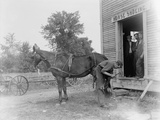 Blacksmith Shoeing a Horse
