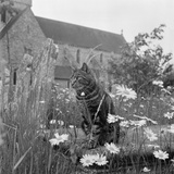 Boxgrove Priory  West Sussex  a View of a Tabby Cat Sat on a Chest Tomb Overgrown with Grasses