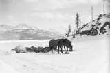Horses and Sledge in the Klondike