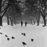 Regent's Park  London  Pigeons Standing on a Snowy Path