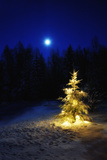Small Christmas Tree Against Silhouette Trees and Full Moon