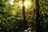 Tropical Rainforest in Panama