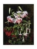 Rubrum Lilies and Fucshias