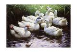 Ashore (Ducks)
