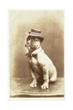 Postcard of a Boxer Puppy Wearing a Brimmed Hat