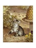 A Curious Kitten