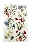 Botanical Print of a Variety of Flowers Giclée par J. Hill