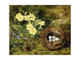 Primroses with a Bird's Nest