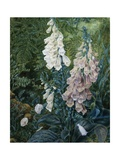 A Still Life of Foxgloves