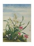 A Joss Flower  a Flower in Great Esteem Chinese Watercolor