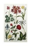 Botanical Print Giclée par J. Hill