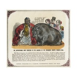 The Hippopotamus Now Exhibiting in the Gardens of the Zoological Society Print