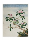 Early 19th-Century Chinese Watercolor of Flowers