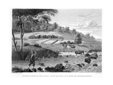 View of the Cox River  West of the Blue Mountains Book Illustration