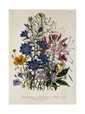 Linum Usitatissimum Botanical Illustration