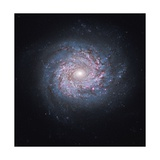 Face-On Spiral Galaxy NGC 3982