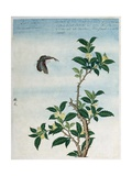 Early 19th-Century Chinese Watercolor of a Cinnamon Plant