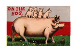 On the Hog Postcard