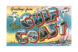 Greetings from the Gulf Coast  Florida