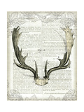 Regal Antlers on Newsprint II Reproduction d'art par Sue Schlabach