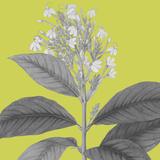 Botaniska V