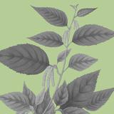 Botaniska IV