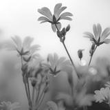 White Garden B&W