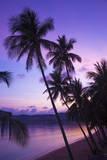 Bo Phut Beach  Koh Samui  Thailand