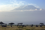 Elephants in Front of Mount Kilimanjaro  Kenya