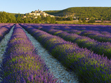 France  Provence  Banon  Lavender to Foreground