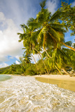 Palm Trees and Tropical Beach  Southern Mahe  Seychelles