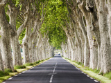 A Tree-Lined Road  Languedoc-Roussillon  France