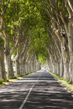 A Tree-Lined Road, Languedoc-Roussillon, France Papier Photo par Nadia Isakova
