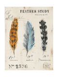 Nature's Feathers
