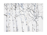 Birch Grove 1