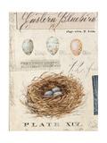 Nature's Nest