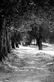 Landscape Path in Black and White Wood