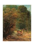 The Hunted Roe Deer on the Alert