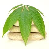 Zen Pebbles Dew