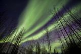 Aurora Borealis XI