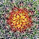 Saguaro Mandala II