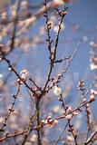 In Bloom X