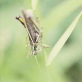 Grasshopper Sq