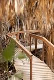 Palm Pathway II