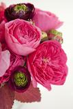 Peony Bouquet II