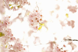 In Bloom XVII