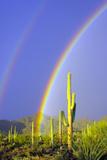 Saguaro Rainbow I