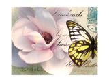 Carte Postale Magnolia II