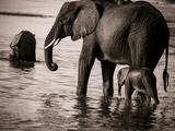 Elephant & Baby