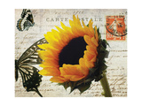 Carte Postale Sunflower